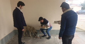 Sokak hayvanlarını doyuruyorlar