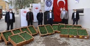 Bayburt'ta Çiftçilere 80 Bin Fide Dağıtılacak