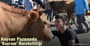 """Canlı Hayvan Pazarında """"Bayram"""" Hareketliliği"""