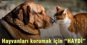 Hayvanların korunması için 'HAYDİ' uygulaması devrede