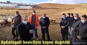 Aydıntepe'de besicilere koyunlar dağıtıldı