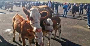 Bayburt'ta hayvan pazarı yarın hizmette