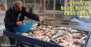 Çoruh#039;un balığı bunlar, canlı...