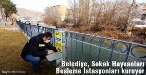 Bayburt Belediyesi, Sokak Hayvanları Besleme İstasyonları kuruyor