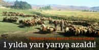 Bayburt'ta canlı hayvan üretimi yarı yarıya azaldı