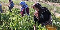 Bayburt kırsalında kadının rolü