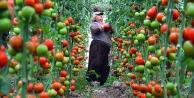 Çiftçinin yüzde 87.6'sı 'para kalmıyor' diyor