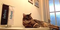 Kediler 'medyatik' oldu