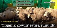 'Organik Koyun' satışa sunuldu
