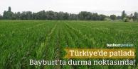 Türkiye'de arttı, Bayburt'ta durma noktasında!