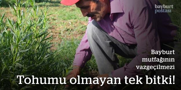 Tohumu olmayan tek bitki!