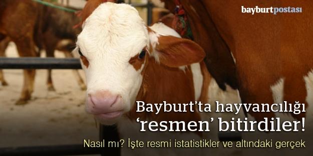 TÜİK, Bayburt'ta hayvancılığı iflas ettirdi!