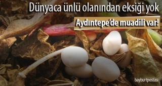 Bayburt Üniversitesi, Aydıntepe fasulyesini tanıtacak