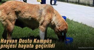 Hayvan Dostu Kampüs Projesi hayata geçirildi